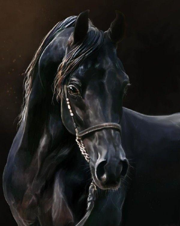 Populaire cheval noir - Page 6 PT74