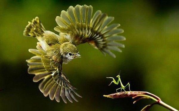 """Résultat de recherche d'images pour """"insecte oiseau"""""""